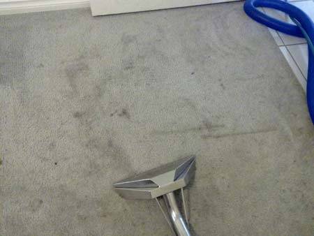 Best Carpet Cleaning Tapping